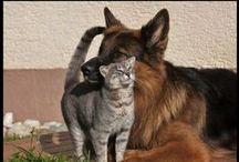 Cat ♡ Dog