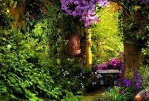 Gardens & Backyards and Paths / Landscape gardening, Yards & Courtyards