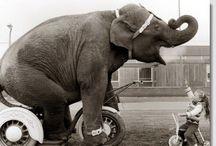 Elephants.... / Gentle Giants / by Marlo Ferguson