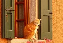 Out-door and on-window cats / Combines my love for cats and admiration for house details