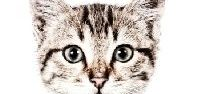 ZiZo Living   Dieren / Op zoek naar een 'huisdier'? Zoveel items waar dieren de hoofdrol spelen!