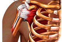 Rotator Cuff Injury Shoulder Injuries