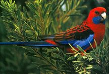 Australia's Flora, Fauna, Cities