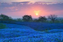 TX Garden / by Della V