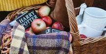 Pommes de reinette. / autumn.