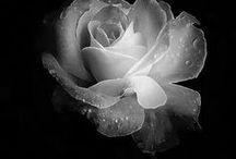 color:monotone (色彩:白・黒・灰) / 色彩:白・黒・灰色のイメージ