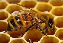 Bees / Bees
