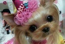 *Pooch Party* / Adorable Doggies !