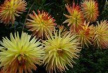 my flower paradise / Kwiaty w moim ogrodzie.  Flowers - my garden.