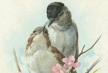 Vintage Birds Printabels