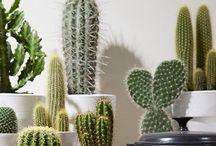 EXTERIORES (plantas)
