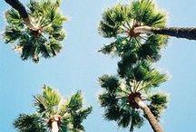 LOS ANGELES CALIFORNIA / LA Life.