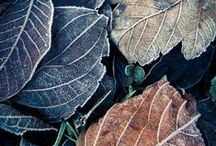 Autumn Interior / Bucking traditional autumn colours for deep greens, mustard yellows, soft greys and hints of warm metals.