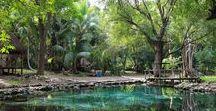 """Ich Ha Lol Xaan """"Flor de huano dentro del agua"""" / Ubicado en el poblado de Hampolol en el Municipio de Campeche, a tan solo 15 kms de la ciudad capital, se encuentran  estos hermosos cuerpos de agua que están inmersos dentro de la Reserva de los Petenes. Una reserva ecológica atractiva para todo público en general y para todos aquellos turistas que pasan por Hampolol, lugar de encanto, paz y el canto de sus aves.  Un lugar privilegiado con el fin de preservar sus recursos naturales e impulsar el ecoturismo."""