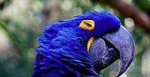 ΧΡΩΜΑ: Μπλε, BLUE Color