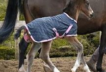 Foals First Rug / The first rug for your foal from Snuggy Hoods.