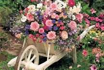 FLORAL / Flowers always make people better, happier, and more helpful; they are sunshine, food and medicine for the soul.