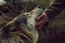To my Wolf Girl / for my daughter, with love...for wolves, dogs, foxes, and such / by Kerith Reid