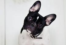 #cachorros / cahorros y mascotas