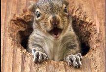 Squirrels / by Majken Fife