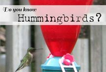 Attracting Birds and Other Wildlife to Your Yard
