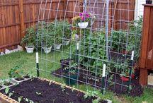 The Garden Lyf