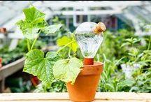 Interior | Greenery / Indoor plants and flowers, urban jungle, interior design, home decor, botany