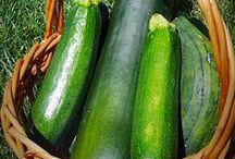 food_zucchini