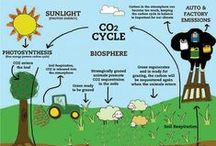Climate - Smart Carbon Cycle / Understanding the #Carbon #Cycle and its relationship to Climate Change.  Raising awareness of the consequences of human amplified CO2, Methane and other Carbon emissions upon this delicate historic balance.