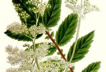 Plaatjes planten