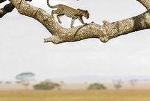 Into the wild / wildlife, animals, nature