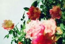 In Bloom / flowers, floral, spring, springtime, blooms, blooming, blossom