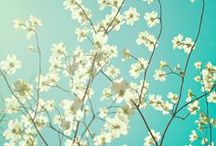 Spring the fling