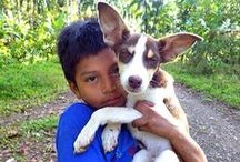 Peace Corps Pets / Peace Corps pets aren't just limited to dogs and cats... / by Peace Corps