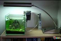Akvaryum / Petcim üzerinde akvaryum ve deniz canlılar ile ilgili makaleler, görseller.