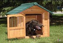 Köpekler / Petcim üzerinde, köpek türleri ile ilgili bilgilendirici makale ve görseller.