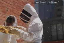 We Love Our Bees / From Melbourne, CBD to suburbs, rooftops to community gardens and backyards