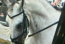 tivoli / Mn paardje