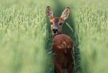 Dieren en natuur