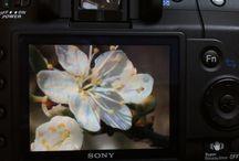 My photography / My photos