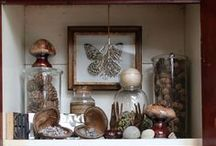 Collections and Curiosities.. / by Thea Burras