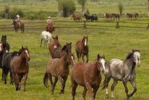 Dude Ranches / by Visit Colorado