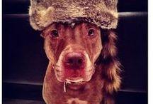 Dogssss :D / by Kara Winfield