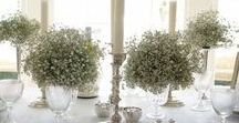 Gypsophila Magic / Gypsophila Magic at Brympton House Weddings & Events, an exclusive use wedding venue in Somerset. Make all your wedding dreams come true with our styling team and the magnificent Brympton House as your wedding & reception backdrop!
