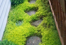 Garden Dreams ...