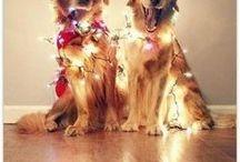 Dog Stuff / Fun stuff for dogs! #OneFurAll