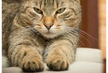 Cat Stuff / Fun stuff for cats! #OneFurAll