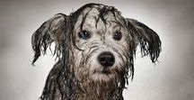 Dirty Dogs / Dogs like to play hard. That means you get a dirty dog. We're sharing fun pictures of dirty dogs.