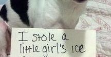 Dog Shaming :) / Cute dog shaming photos and videos.