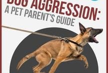 Dog Training Tips / Hints and Tips for training your furry friend.